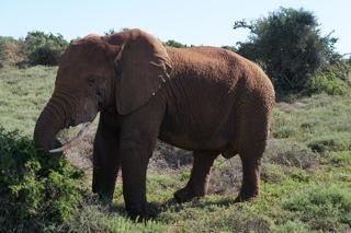 Addo Elephant National Park - South Africa