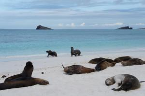 The Galapagos Islands || wanderlustingtraveler.wordpress.com
