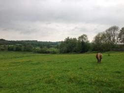Shetland Pony! - Etchingham, England